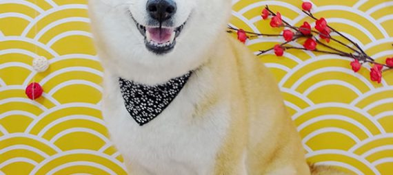 笑顔の柴犬ちゃん