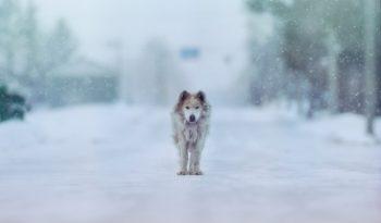 雪の中たたずむ犬